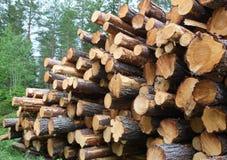 Registros da madeira do pinho empilhados para a coleção imagem de stock
