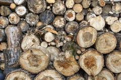 Registros de la madera Fotografía de archivo libre de regalías