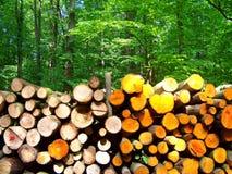 Registros de la madera Fotos de archivo libres de regalías