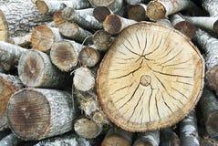 Registros de madeira Fotografia de Stock