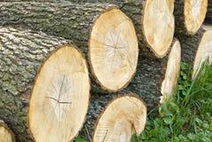 Registros de madeira empilhados, troncos de árvore Fotografia de Stock