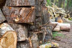 Registros de madera apilados con los árboles de pino Fotografía de archivo libre de regalías