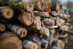 Registros de madera apilados con los árboles de pino Foto de archivo libre de regalías