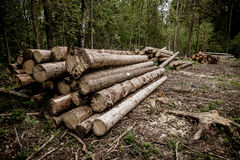 Registros de madera con el bosque en troncos del fondo de los árboles cortados y apilados en el primero plano, bosque verde en el Foto de archivo