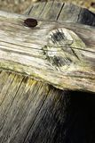 Registros de madera conectados por el clavo del metal Foto de archivo libre de regalías