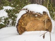 Registros de madera debajo de la nieve Imagen de archivo libre de regalías