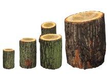 Registros de madera del abedul aislados en blanco Imágenes de archivo libres de regalías