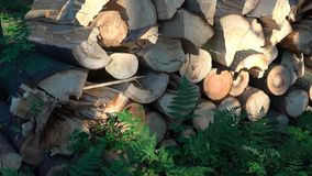 Registros de madera del bosque de pino en los registros recientemente tajados del árbol del bosque apilados para arriba encima de almacen de video