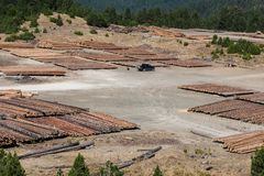 Registros de madera del bosque de pino en el bosque, apilados en pilas Montañas de apertura de sesión de Pindus Imagen de archivo
