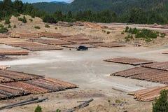 Registros de madera del bosque de pino en el bosque, apilados en pilas Montañas de apertura de sesión de Pindus Imagenes de archivo