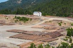 Registros de madera del bosque de pino en el bosque, apilados en pilas Montañas de apertura de sesión de Pindus Fotos de archivo libres de regalías