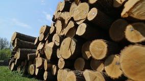 Registros de madera en la serrería metrajes