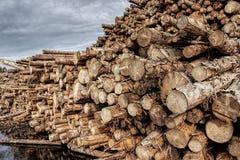 Registros de madera naturales apilados Diversos formatos del árbol imagenes de archivo