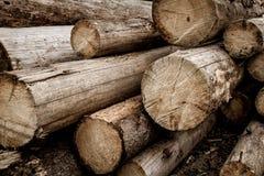 Registros de madera Preparación de madera en bosque Fotos de archivo libres de regalías