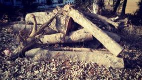 Registros de un árbol Fotos de archivo