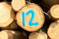Registros del árbol con el número doce Imagen de archivo libre de regalías