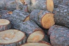 Registros del árbol de pino Imagen de archivo