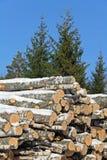 Registros del abedul y árboles Spruce Fotos de archivo libres de regalías