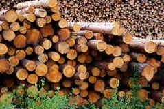 Registros del pino Foto de archivo