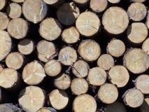 Registros del pino Fotografía de archivo