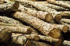 Registros del pino Foto de archivo libre de regalías
