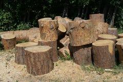 Registros del pino Imagen de archivo libre de regalías