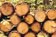 Registros doblados doblados Leña en la madera Imágenes de archivo libres de regalías