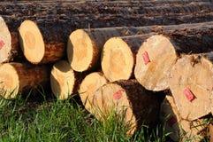 Registros empilados de la madera Imagen de archivo libre de regalías