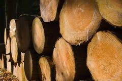 Registros empilhados da madeira Fotografia de Stock