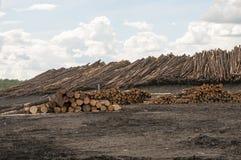 Registros en el molino de la madera de construcción Fotografía de archivo