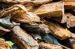 Registros tajados de la madera Fotos de archivo libres de regalías