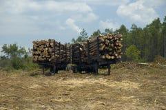Registros y bosque. Fotos de archivo