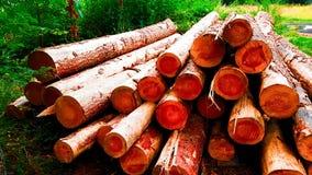 Registros y bosque del fuego imagen de archivo
