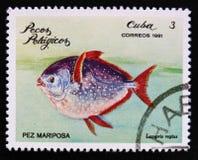 Regius fjärilsfiskLampris den pelagiska fisken för serie, circa 1981 Royaltyfri Fotografi