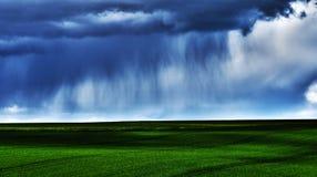 Regn över fältet Royaltyfria Foton