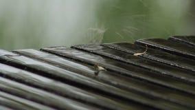Regn för flodträdsand stock video