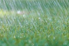 Regn faller på nytt grönt gräs royaltyfria bilder