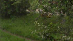 Regn faller tungt, regndroppar arkivfilmer