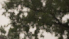 Regn faller tungt, regndroppar lager videofilmer
