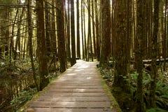 Regn Forest Boardwalk Royaltyfria Bilder