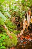 Regn Forest Frame Arkivfoton