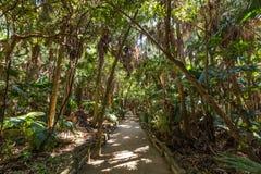 Regn Forest Park i den Aoshima relikskrin i Miyazaki, Japan Arkivfoton