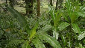 Regn i djungeln lager videofilmer