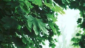 Regn i skogen av gröna träd arkivfilmer