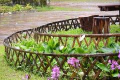 Regn i trädgård Royaltyfri Foto