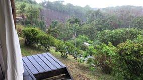 Regn i tropisk inställning arkivfilmer