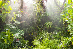 Regn i tropisk rainforest Arkivbild