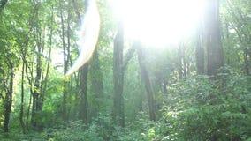 Regn med intensivt ljust solljus Den rörande kameran i lös grön skog eller parkerar med linssignalljuset stock video
