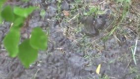 Regn och pölar stock video