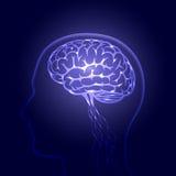 Regn och process av mänskligt tänka Arkivbild